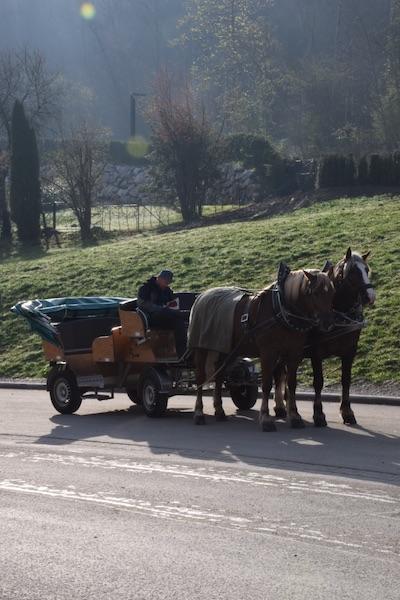 Neuschwanstein horse carriage_2eaa