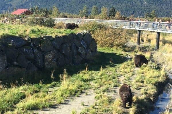 3 Bears at Alaksa Wildlife Conservation Center