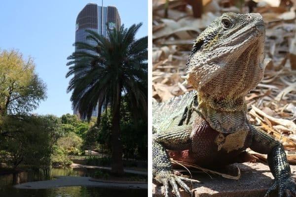 Brisbane Australia botanical gardens and lizard