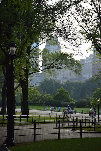 Buildings and Central Park New York City