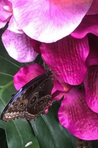 Butterfly on flower Butterfly House Vienna Austria