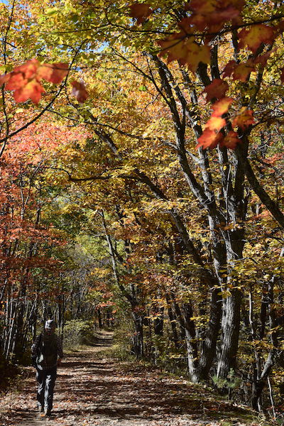 Hiker alone on hiking trail