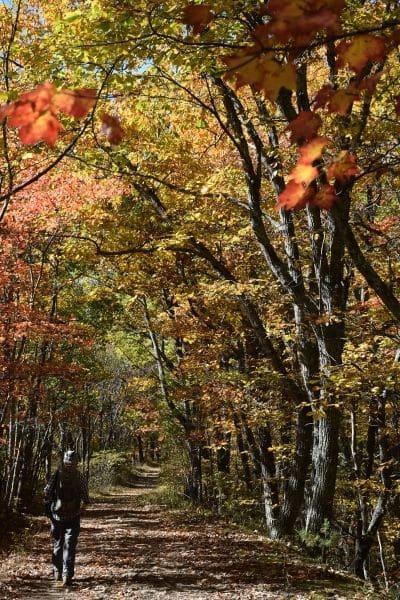 McAfees Knob Virginia hiker