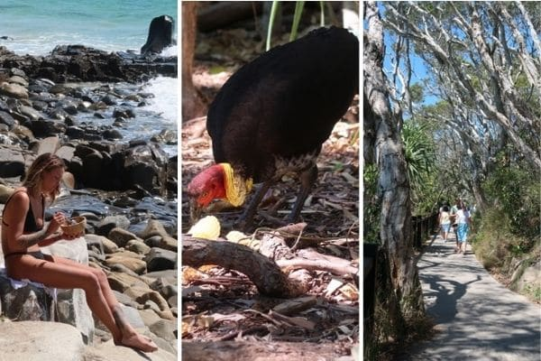 Noosa Natl Park Australia bird and people on trail and beach