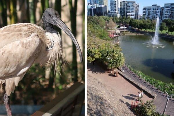 Roma St Park fountain and bird Brisbane