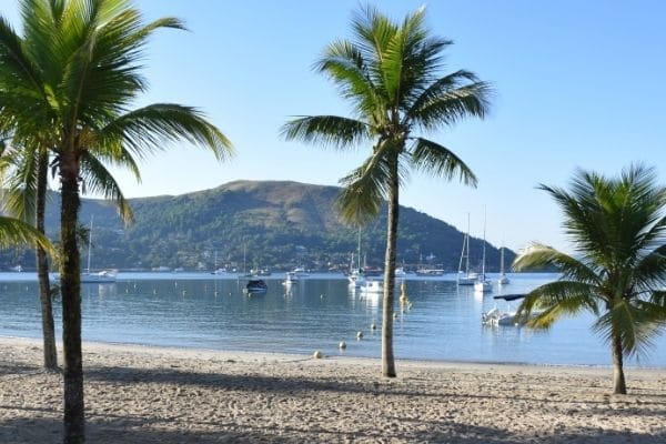 Palm trees on beach in front of water can be seen in covid travel
