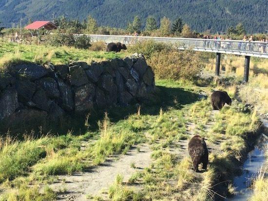 Bears at the Alaska Wildlife Conservation Center