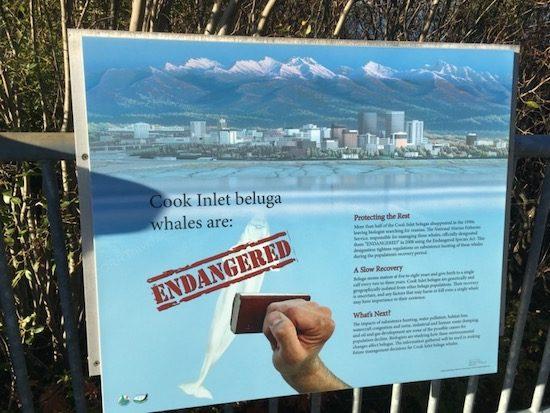 Beluga Point sign Alaska