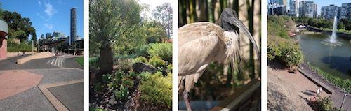 Roma St Park, fountain and bird Brisbane
