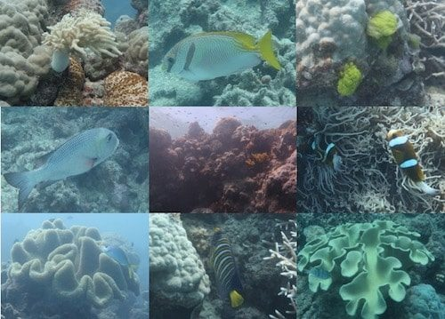 Great Barrier Reef coral and fish Cairns Australia