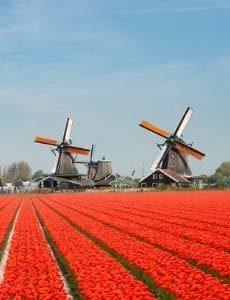 Netherlands_banner